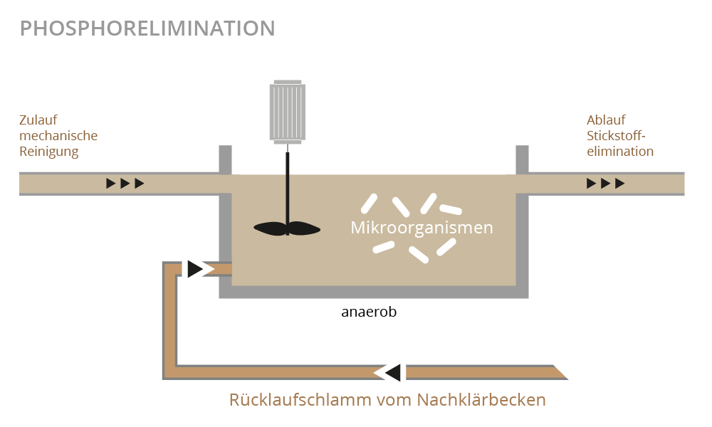 Illustration Phosphorelimination